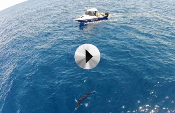 VIDEO: South Coast marlin
