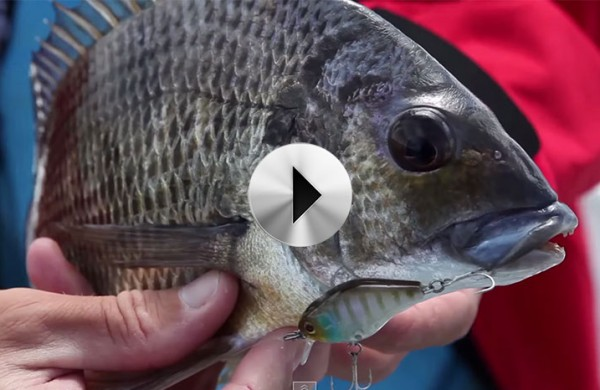 VIDEO: Fishing Journeys – Episode 3