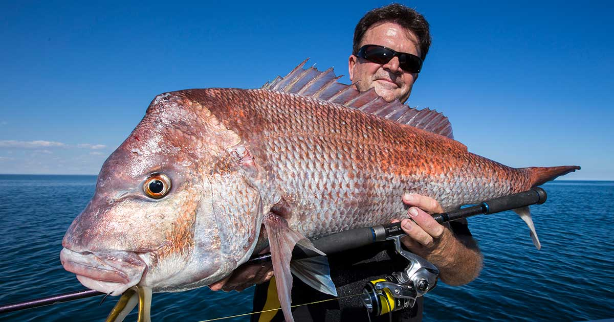 big snapper fish